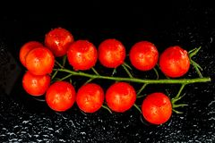 Fresh cherry tomatoes on the vine on black background with water puddles Stock Photo