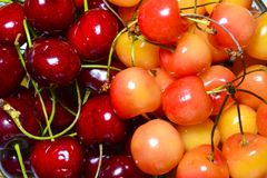 Fresh cherry of two varieties as an abstract background. The concept of a healthy diet, vitamins stock photo
