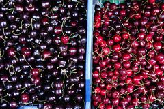 Fresh Cherry Varieties Royalty Free Stock Images