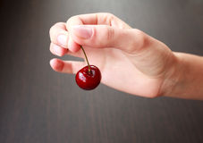 Fresh cherry in woman hand Stock Image