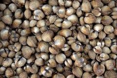 Fresh cherrystone clams Stock Photo