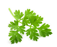 Fresh Chervil branch Stock Images