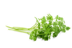 Fresh Chervil bunch. Isolated on white background royalty free stock photo