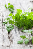 Fresh chervil. Fresh green chervil on wood Stock Photos