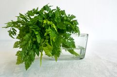 Fresh Chervil Parsley Bunch in a Glass on white background. Good for soup and fish dishes. royalty free stock images