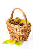 Fresh chestnut Royalty Free Stock Images