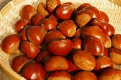 Fruit of fall, chestnut. Fresh chestnut in bamboo hijacker royalty free stock photos