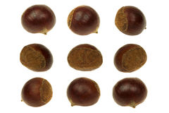Fresh chestnut isolated 360 Degrees Concept Stock Photos