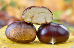 Fresh chestnuts Royalty Free Stock Image