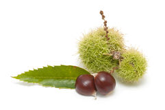 Fresh  chestnuts Royalty Free Stock Photography