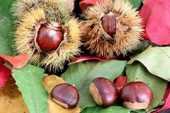 Fresh chestnuts Stock Image