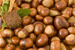 Fresh chestnuts Royalty Free Stock Images