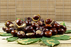 Fresh Chestnuts from an Autumn Harvest and Barbed Crust on an Old Rustic Wooden Table with Leaves Royalty Free Stock Image