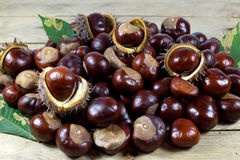 Fresh Chestnuts from an Autumn Harvest and Barbed Crust on an Old Rustic Wooden Table with Leaves Royalty Free Stock Photo