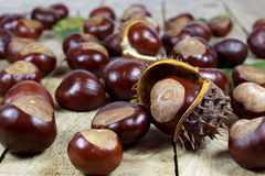 Fresh Chestnuts from an Autumn Harvest and Barbed Crust on an Old Rustic Wooden Table with Leaves Stock Photography