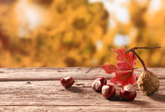 Fresh chestnuts from an autumn harvest Stock Photography