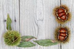 Fresh chestnuts bur Royalty Free Stock Photos