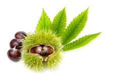 Fresh chestnuts with green leaves, isolated Royalty Free Stock Images