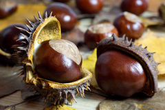 Fresh Chestnuts with Open Husk on an Old Rustic Wooden Table with Brown Autumn Leaves. Fresh Shiny Chestnuts with Open Husk on an Old Rustic Wooden Table with Royalty Free Stock Images