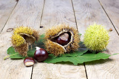 Fresh Chestnuts with Open Husk on an Old Rustic Wooden Table with Green Leaves Royalty Free Stock Images