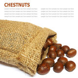 Fresh Chestnuts in yute isolated on white background Stock Photos