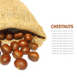 Fresh Chestnuts in yute isolated on white background Stock Photography
