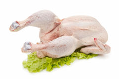 Fresh Chicken Stock Images