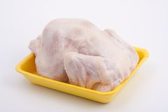 Fresh chicken-broiler (hen) Stock Image