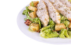 Fresh chicken caesar salad Stock Images