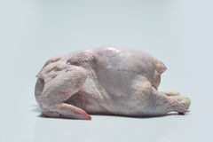 Fresh chicken carcass Royalty Free Stock Image