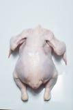 Fresh chicken carcass Stock Photography