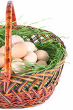 Fresh chicken egg Royalty Free Stock Images