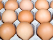 Fresh chicken eggs arranged in rows Stock Images