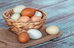 Fresh chicken eggs in a basket Stock Photos