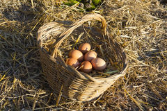 Fresh chicken eggs in a basket and straw Stock Photos