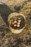 Fresh chicken eggs in a basket and straw Royalty Free Stock Images