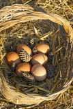 Fresh chicken eggs in a basket and straw Royalty Free Stock Photos