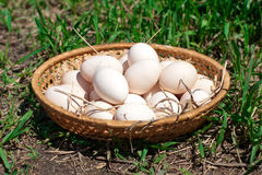 Fresh chicken eggs in a basket Royalty Free Stock Image