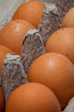 Fresh chicken eggs in carton Stock Image