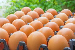 Fresh chicken eggs Royalty Free Stock Images