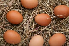 Fresh chicken eggs on a hay background stock photo