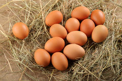 Fresh chicken eggs organic food Stock Photos