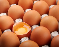 Fresh chicken eggs organic food Stock Photography