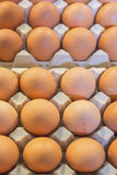 Fresh chicken eggs in packing Stock Images