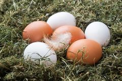 Fresh chicken eggs on straw on the farm. Rustic style.  stock photos