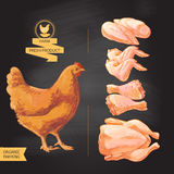 Fresh chicken meat. Top view.  on a white vector vintage  sketch hand drown Royalty Free Stock Images