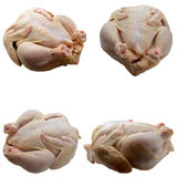 Fresh chicken meat. Royalty Free Stock Photo