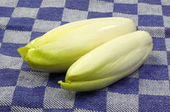 Fresh chicory Stock Photos