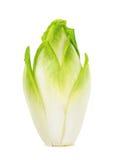 Fresh chicory isolated Stock Image