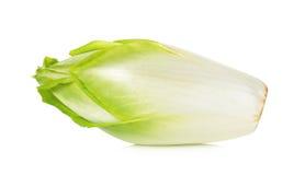 Fresh chicory isolated on a white background Stock Photos